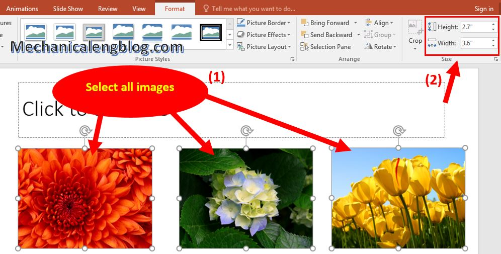 how to resize image in powerpoint 5