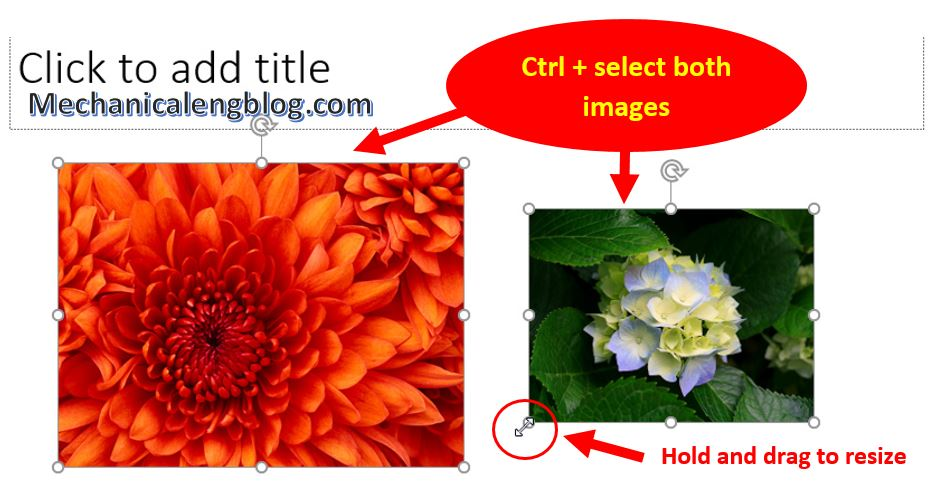 how to resize image in powerpoint 6